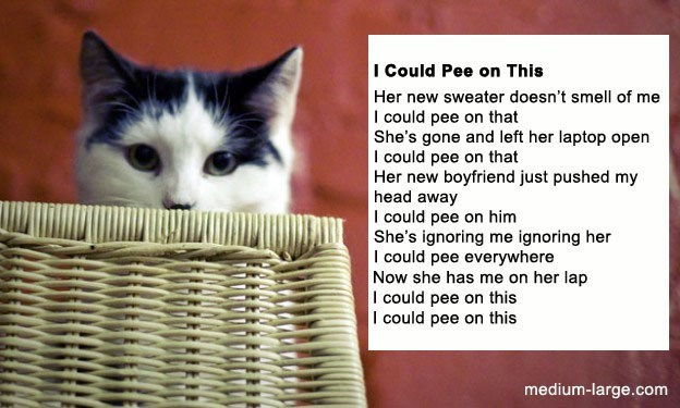 poem - Cat - I Could Pee on This Her new sweater doesn't smelll of me I could pee on that She's gone and left her laptop open I could pee on that Her new boyfriend just pushed my head away I could pee on him She's ignoring me ignoring her I could pee everywhere Now she has me on her lap I could pee on this I could pee on this medium-large.com