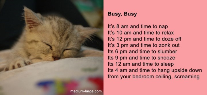 poem - Cat - Busy, Busy It's 8 am and time to nap It's 10 am and time to relax It's 12 pm and time to doze off It's 3 pm and time to zonk out Its 6 pm and time to slumber Its 9 pm and time to snooze Its 12 am and time to sleep Its 4 am and time to hang upside down from your bedroom ceiling, screaming medium-large.com