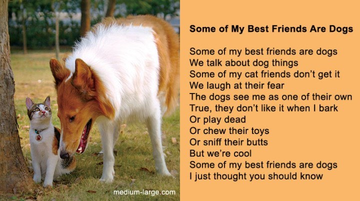 poem - Dog - Some of My Best Friends Are Dogs Some of my best friends are dogs We talk about dog things Some of my cat friends don't get it We laugh at their fear The dogs see me as one of their own True, they don't like it when I bark Or play dead Or chew their toys Or sniff their butts But we're cool Some of my best friends are dogs I just thought you should know medium-large.com