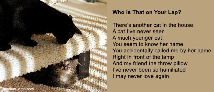 poem - Text - Who Is That on Your Lap? There's another cat in the house A cat I've never seen A much younger cat You seem to know her name You accidentally called me by her name Right in front of the lamp And my friend the throw pillow I've never been so humiliated I may never love again adium-large.com