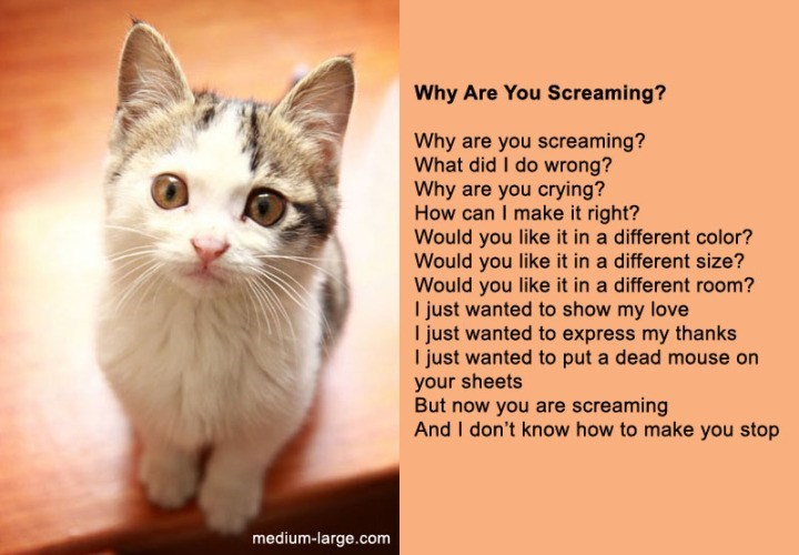 poem - Cat - Why Are You Screaming? Why are you screaming? What did I do wrong? Why are you crying? How can I make it right? Would you like it in a different color? Would you like it in a different size? Would you like it in a different room? I just wanted to show my love I just wanted to express my thanks I just wanted to put a dead mouse on your sheets But now you are screaming And I don't know how to make you stop medium-large.com