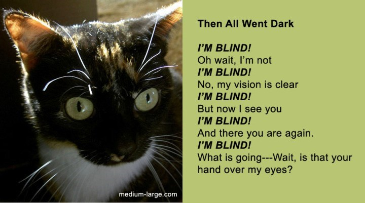 poem - Cat - Then All Went Dark I'M BLIND! Oh wait, I'm not I'M BLIND! No, my vision is clear I'M BLIND! But now I see you I'M BLIND! And there you are again. I'M BLIND! What is going---Wait, is that your hand over my eyes? medium-large.com