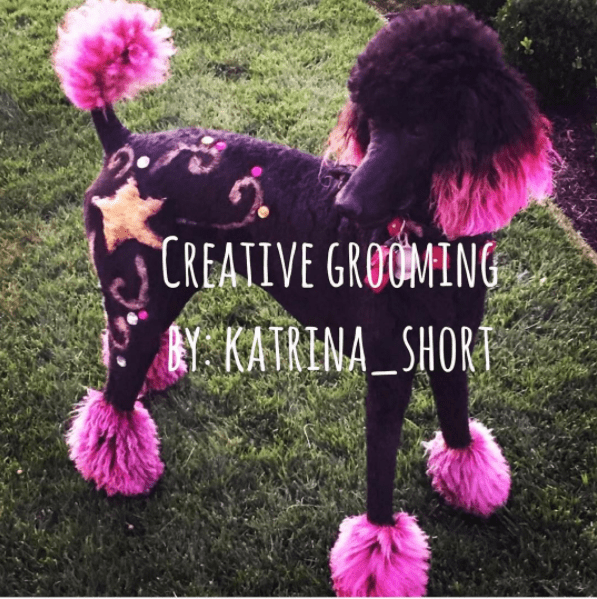 Dog - CREATIVE GROUMING AY KATRINA_SHORT