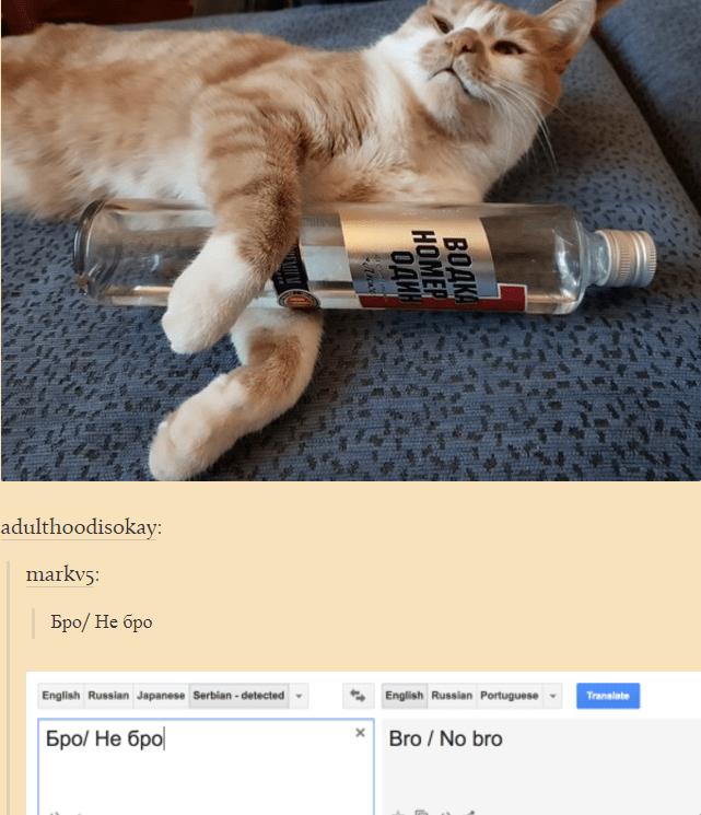 russian cat translation