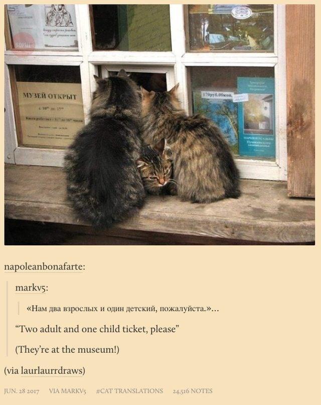 "russian cat translation - Fur - m09 870py 6.00am МУЗЕЙ ОТКРЫТ napoleanbonafarte: markv5 «Нам два взрослых и один детский, пожалуйста. »... ""Two adult and one child ticket, please"" (They're at the museum!) (via laurlaurrdraws) VIA MARKV5 #CAT TRANSLATIONS JUN. 28 2017 24.516 NOTES"