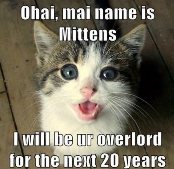 Kitten overlord introduction and formalities meme