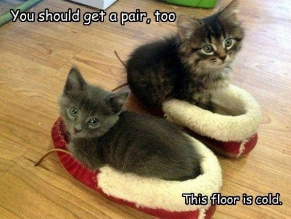 Kittens in your slippers telling you to get your own pair too, because those floors are cold.