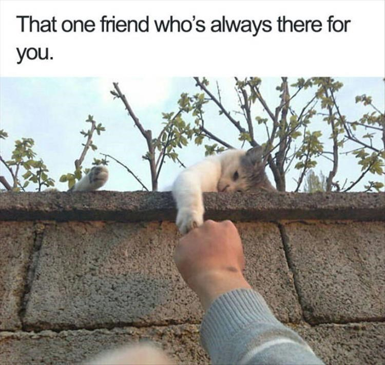 Cat reaching over the fence to give you the reassurance you need.