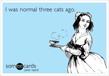 gag greeting card about how normal was like 3 cats ago