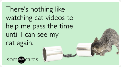 Text - There's nothing like watching cat videos to help me pass the time until I can see my cat again. somee cards