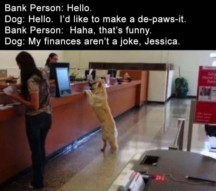 photo of a dog at the bank