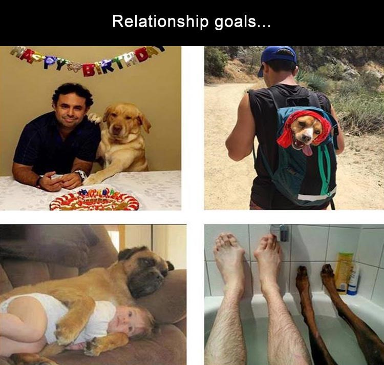 photo of dog and his owner in different relationship phazes