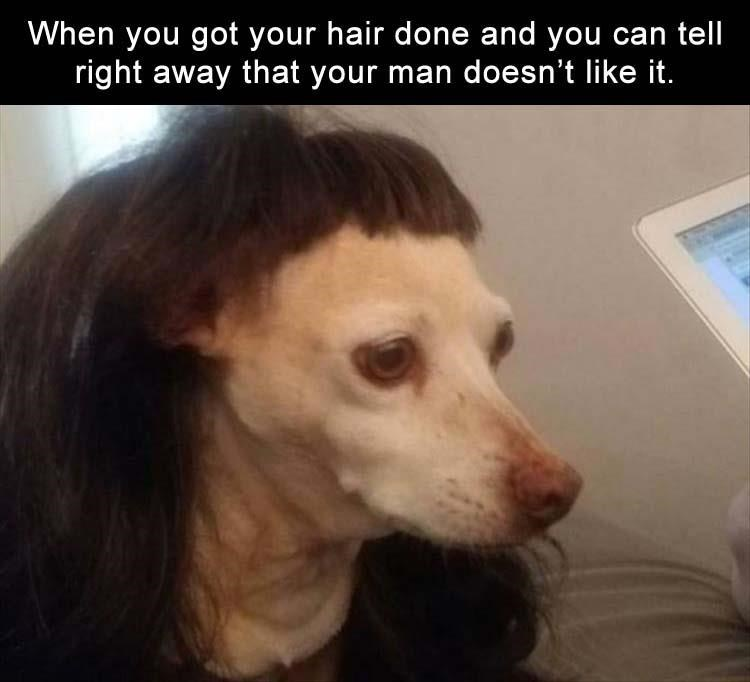 photo of a dog not pleased of her haircut
