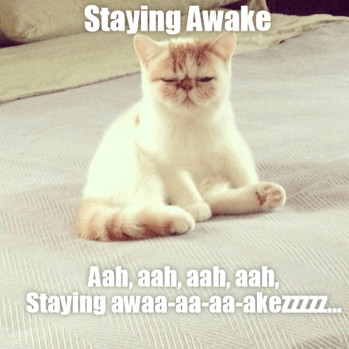 Cat meme of barely being able to stay awake