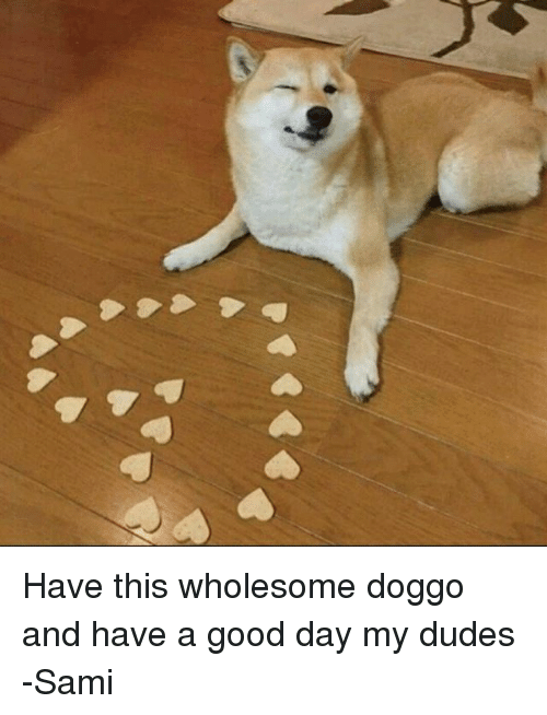 Dog - Have this wholesome doggo and have a good day my dudes -Sami