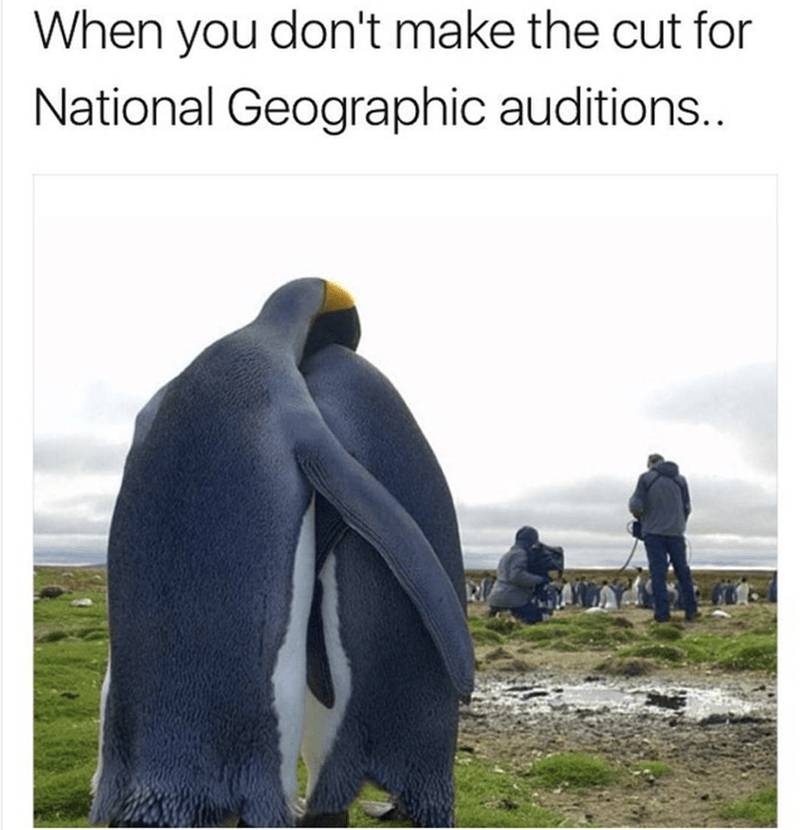 Penguin - When you don't make the cut for National Geographic auditions..