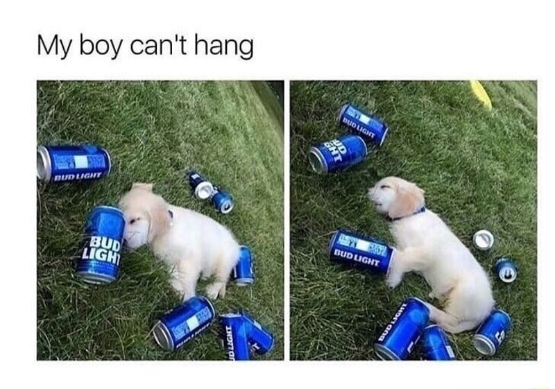 Funny meme with a dog surrounded by beer cans, saying he went too hard.