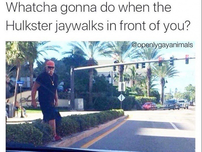 Meme about Hulk Hogan jaywalking in front of your car and you can't do nothing about it.