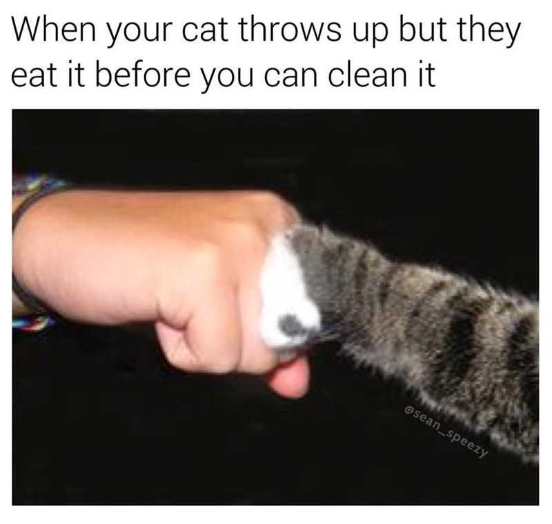 Funny meme about when your cat puke but it eats the puke before you can clean it.