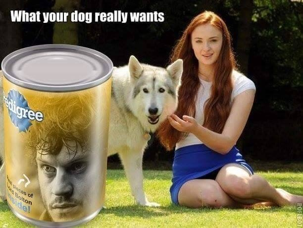 Meme of dog food and game of thrones
