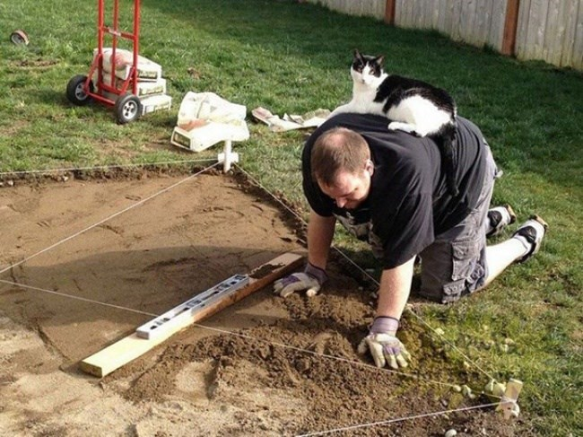 cat on the workers