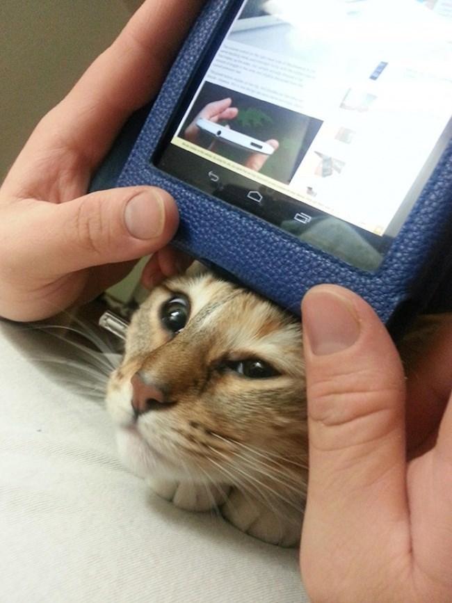 tablet cat
