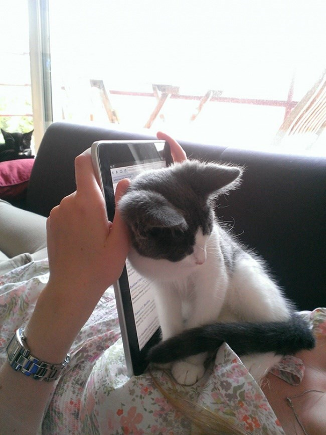 cat getting between your eyes and the ipad