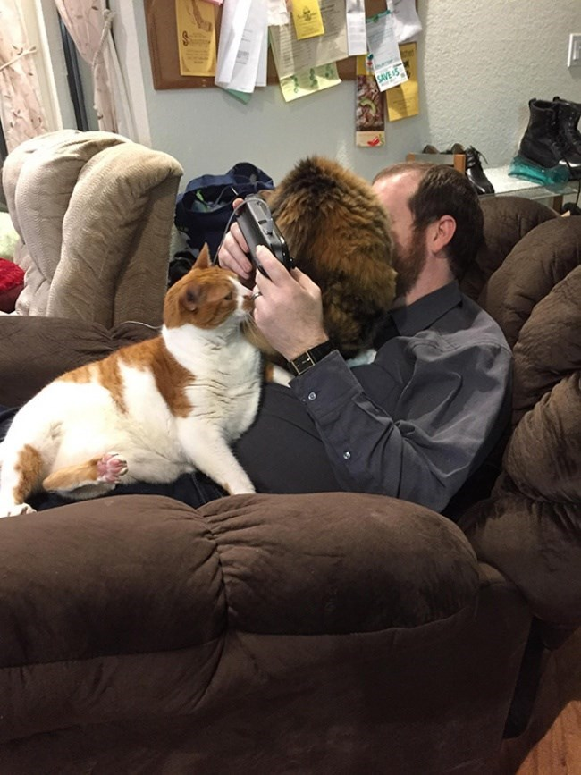 cats all over man on armchair