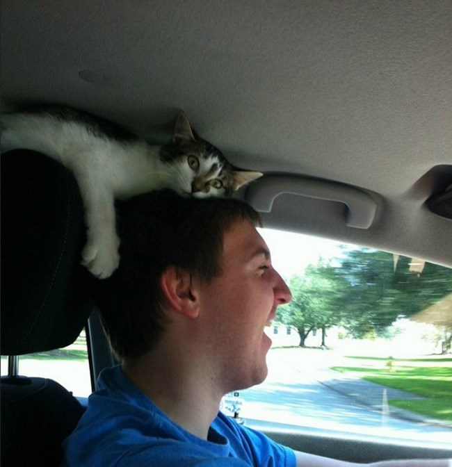 cat on the driver