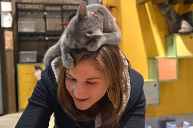cat on woman's head