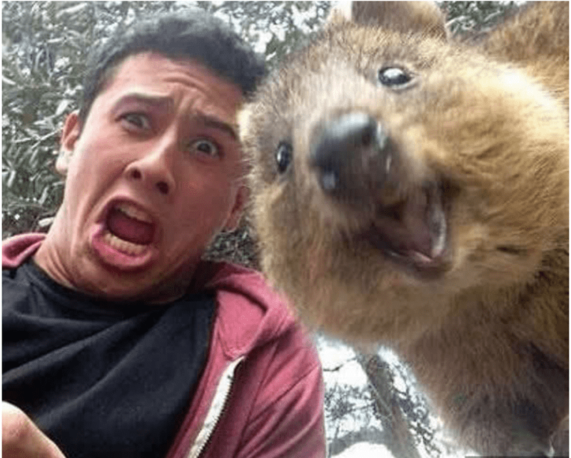 This quokka is as shocked as he is.