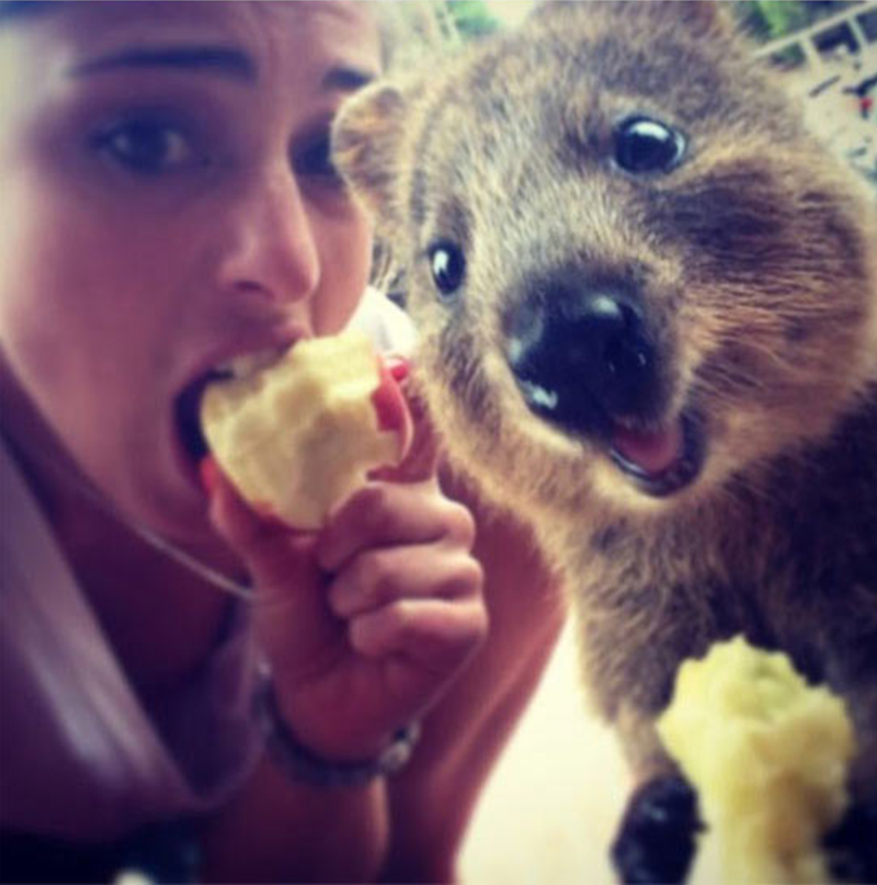 quokka selife eating apple with a girl