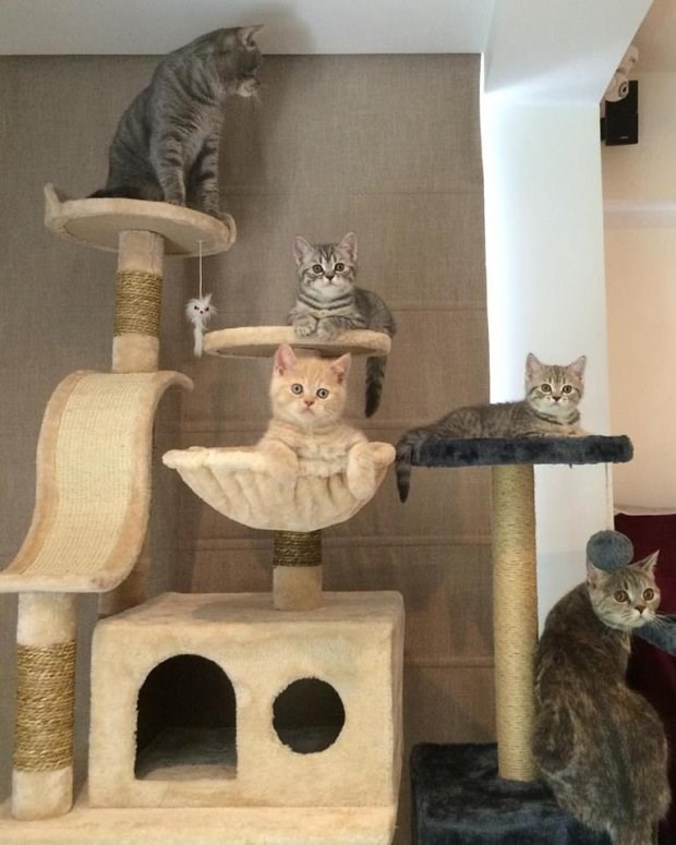 Meatball's family of cats