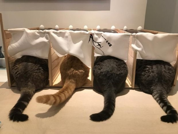 Voting booths to feed cats with equality