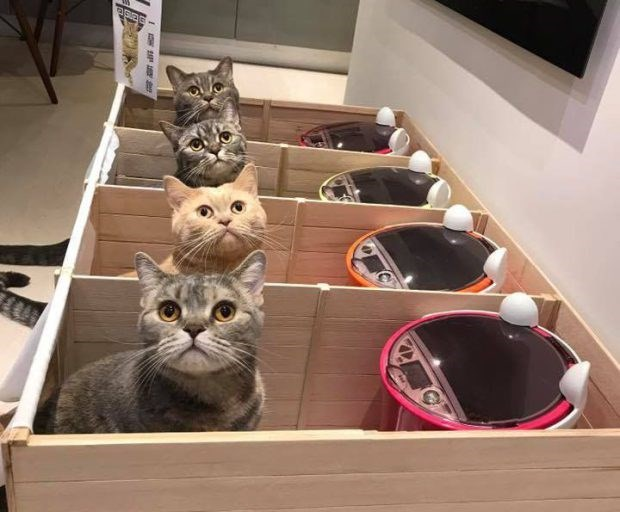 Cats eating in their pods