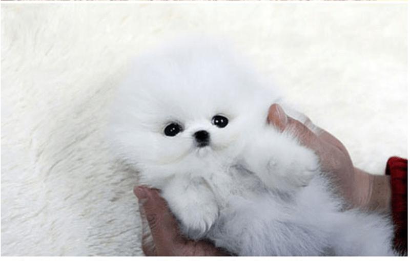 toy like dog