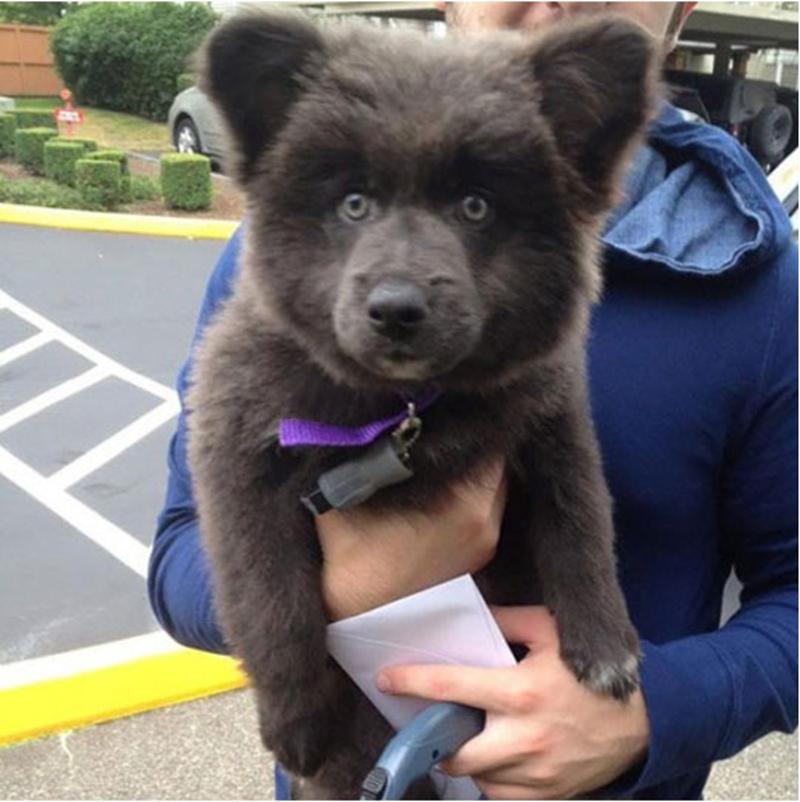 bear dog