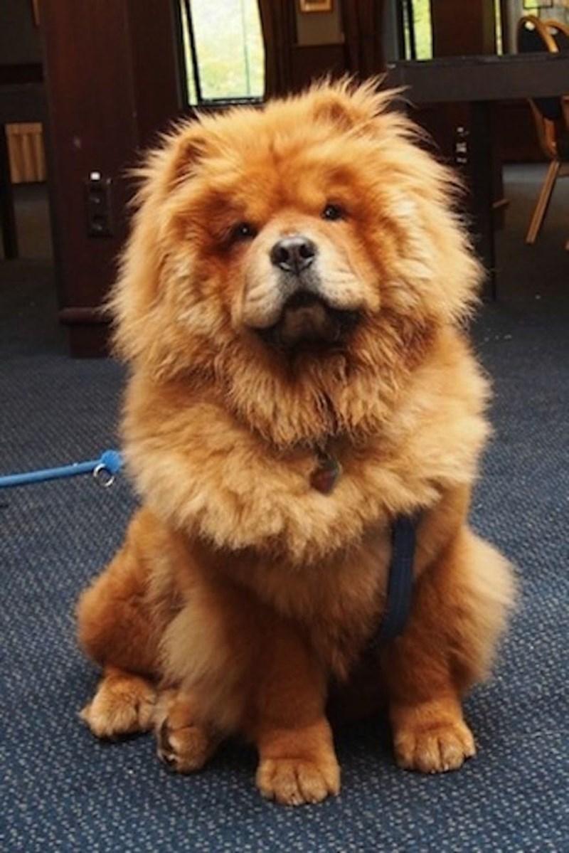 fluffy dog on carpet