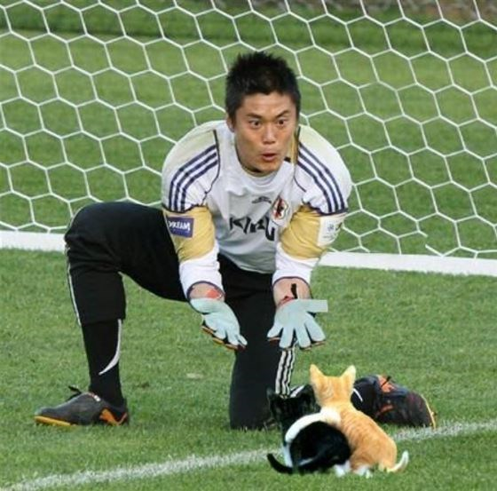 Photoshopped image of goalie goading kittens to his hands
