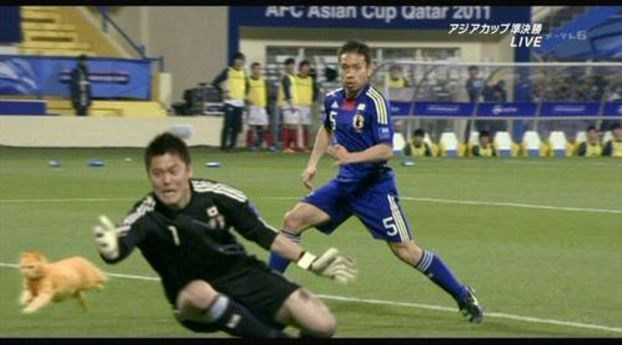 Japanese soccer players emphatically gesturing to catch that cat.