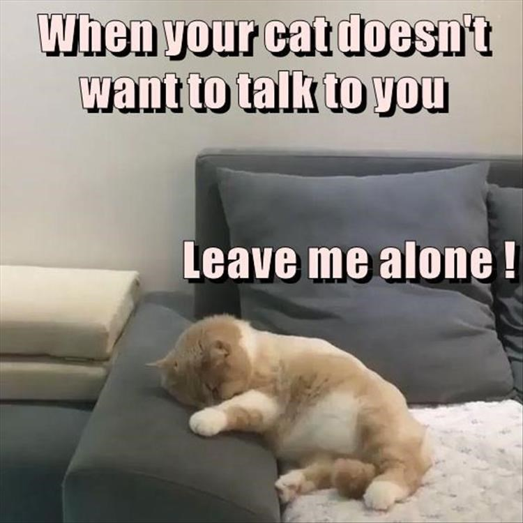 cat that just wants to be left alone