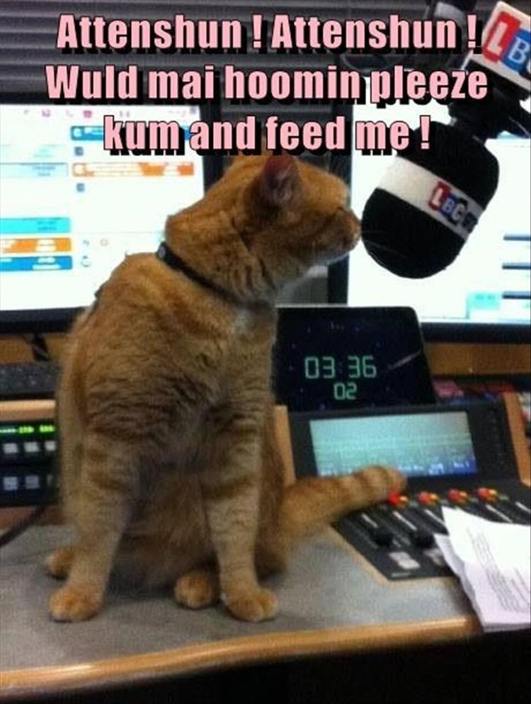 meme of cat on the mic