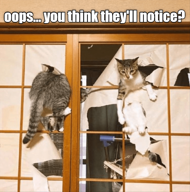 Cat meme about that window they destroyed that no body is going to notice.