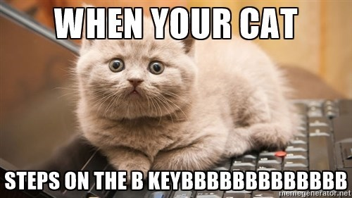 cat on the keyboard meme