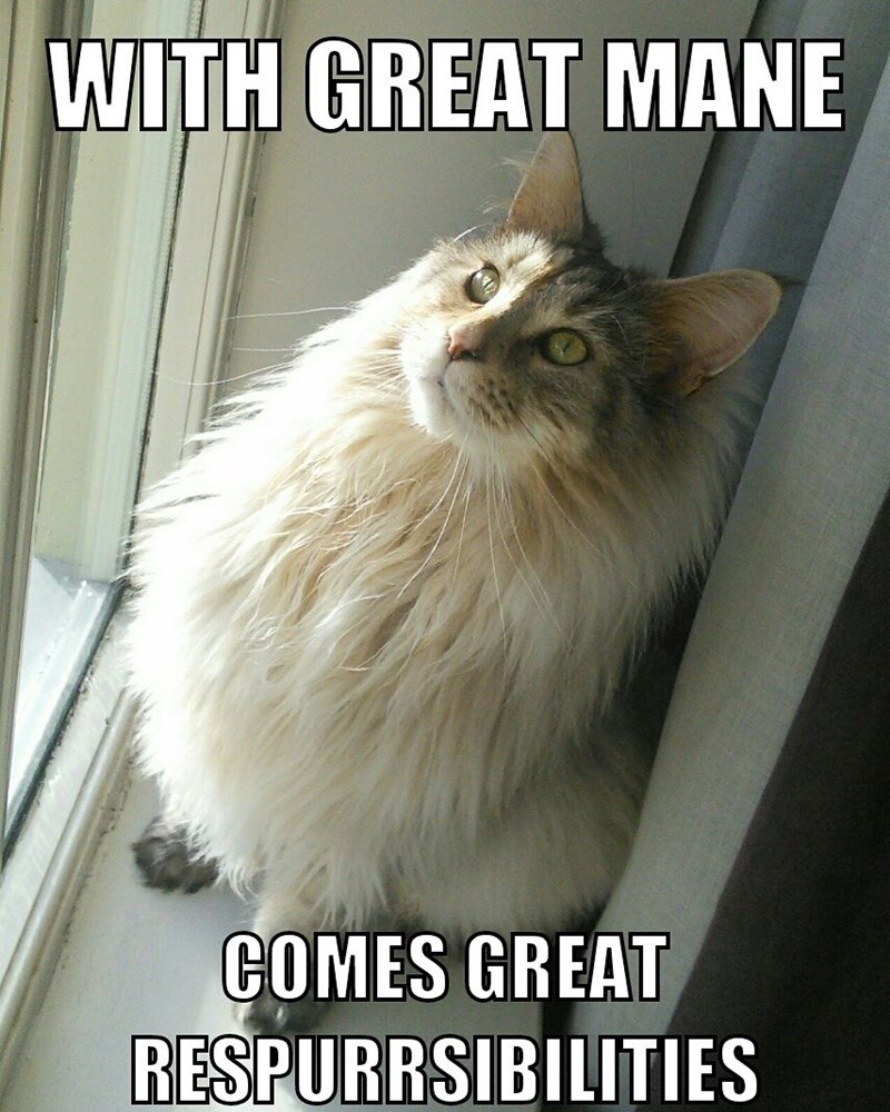 Cat meme of great mane comes great respurrsibilities - funny meme