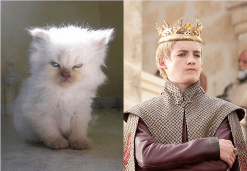 Angry kitten that looks like Joffrey Baratheon