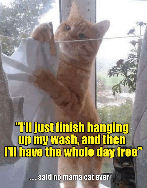 Cat meme of momma cat hanging up the laundry so she can free up the day.
