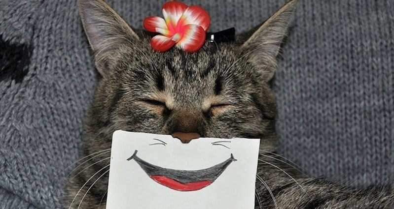 smiling cat with augmented smile and flower physically added