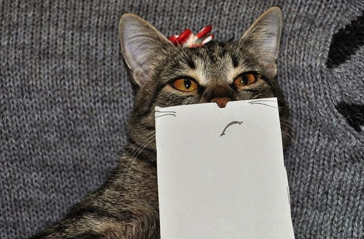 Cat uncertain and staring off to the side with paper foreground facial expression.
