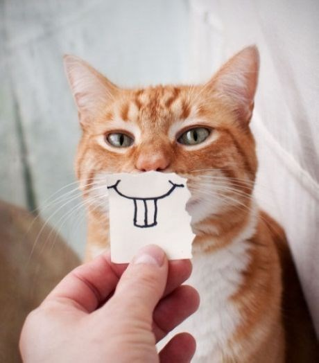 bucktooth cat